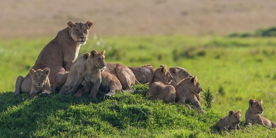 Kenya Budget Safari Package
