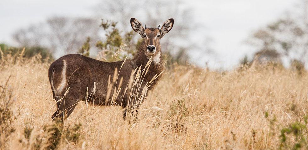 Exciting Kenya Safari