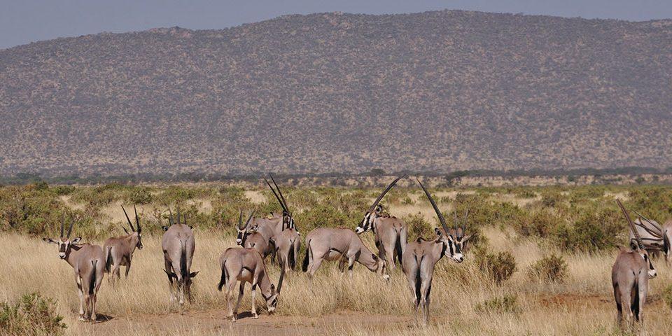 Best Kenya Safari Tour