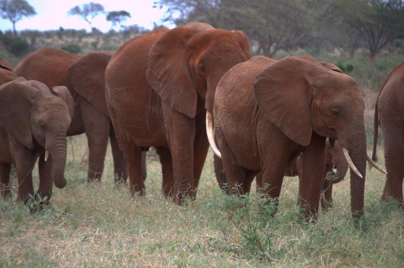 Great Kenya Safari Tour