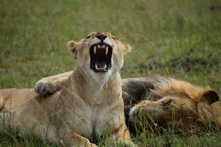 Kenya Adventure Safari Tour Package