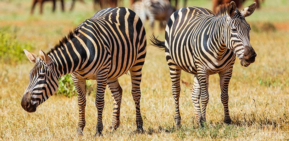 Kenya Safari Package Tsavo/ Kenya Safari Package/ Kenya Safari/ Tsavo East National Park/ Tsavo West National Park