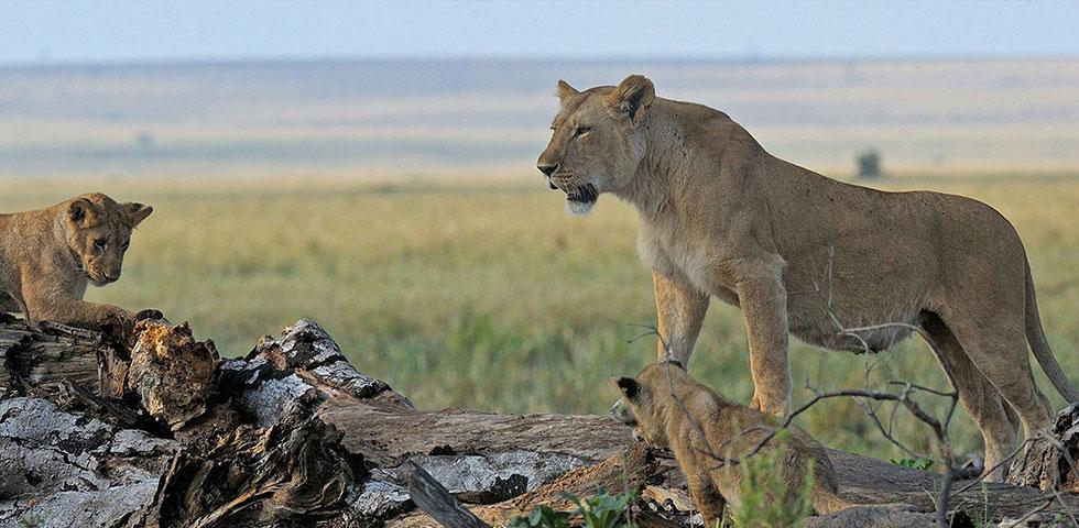 Kenya Tanzania Combined Safaris