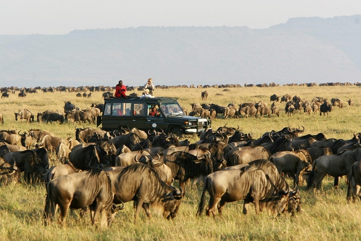 Wildebeest Migration Safari/Serengeti National Park/Ngorongoro crater/Tanzania Safari Tour/Tanzania wildebeest Migration Safari