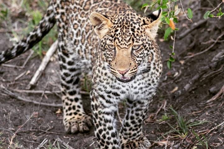 Incredible Tanzania Safari