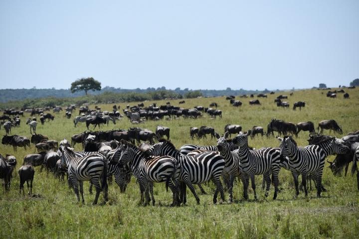 Best Tanzania Budget Safari