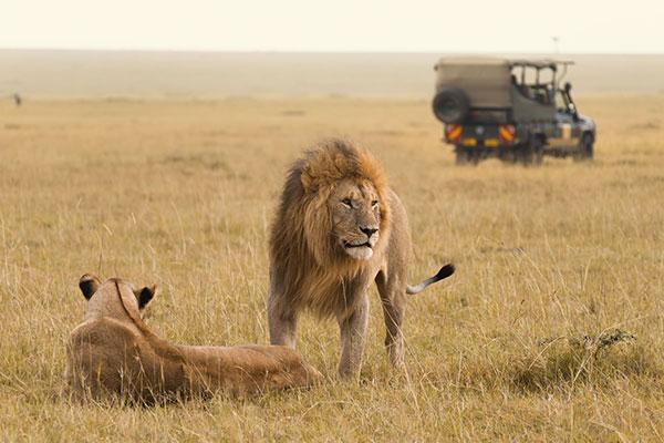 Combined Kenya and Tanzania safaris