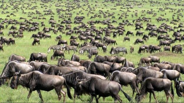 Kenya Customized Safaris
