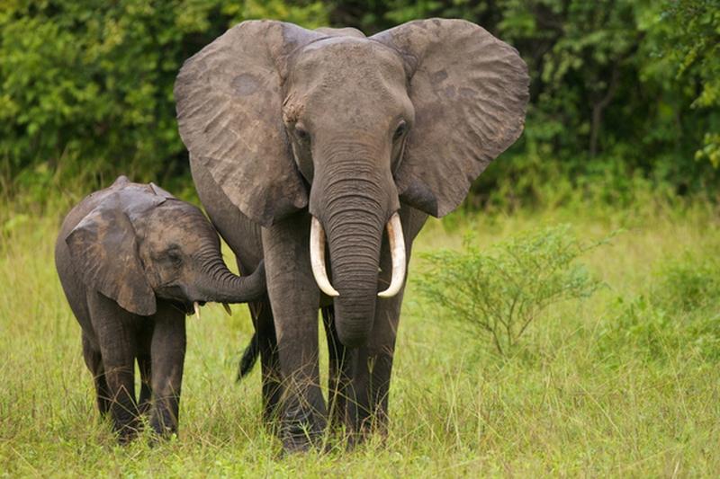 Safari Kenya Package