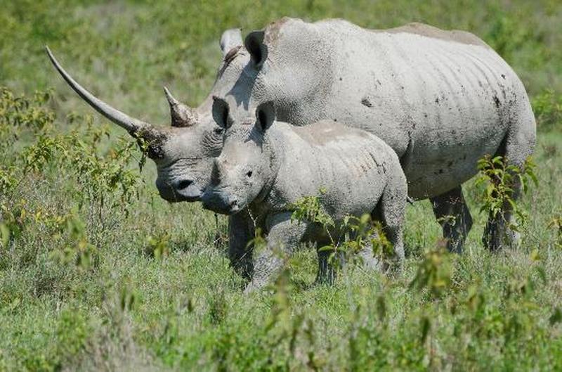 Kenya Wildlife Adventure