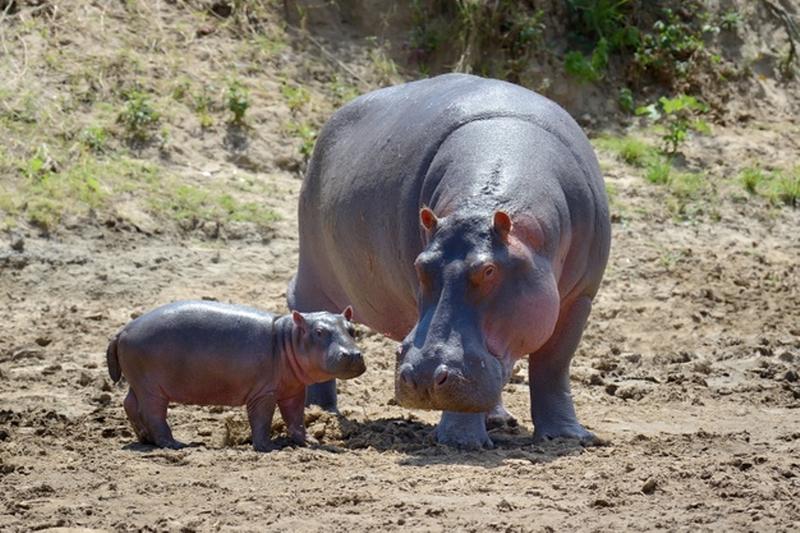 Best Kenya Lodge Safari