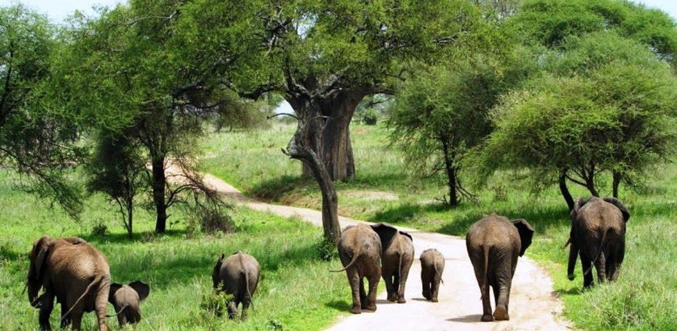 Africa Budget Safari