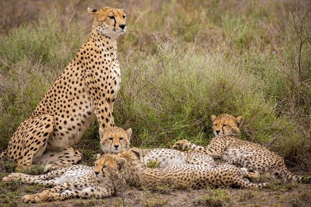 African Safari Holiday In Kenya and Tanzania
