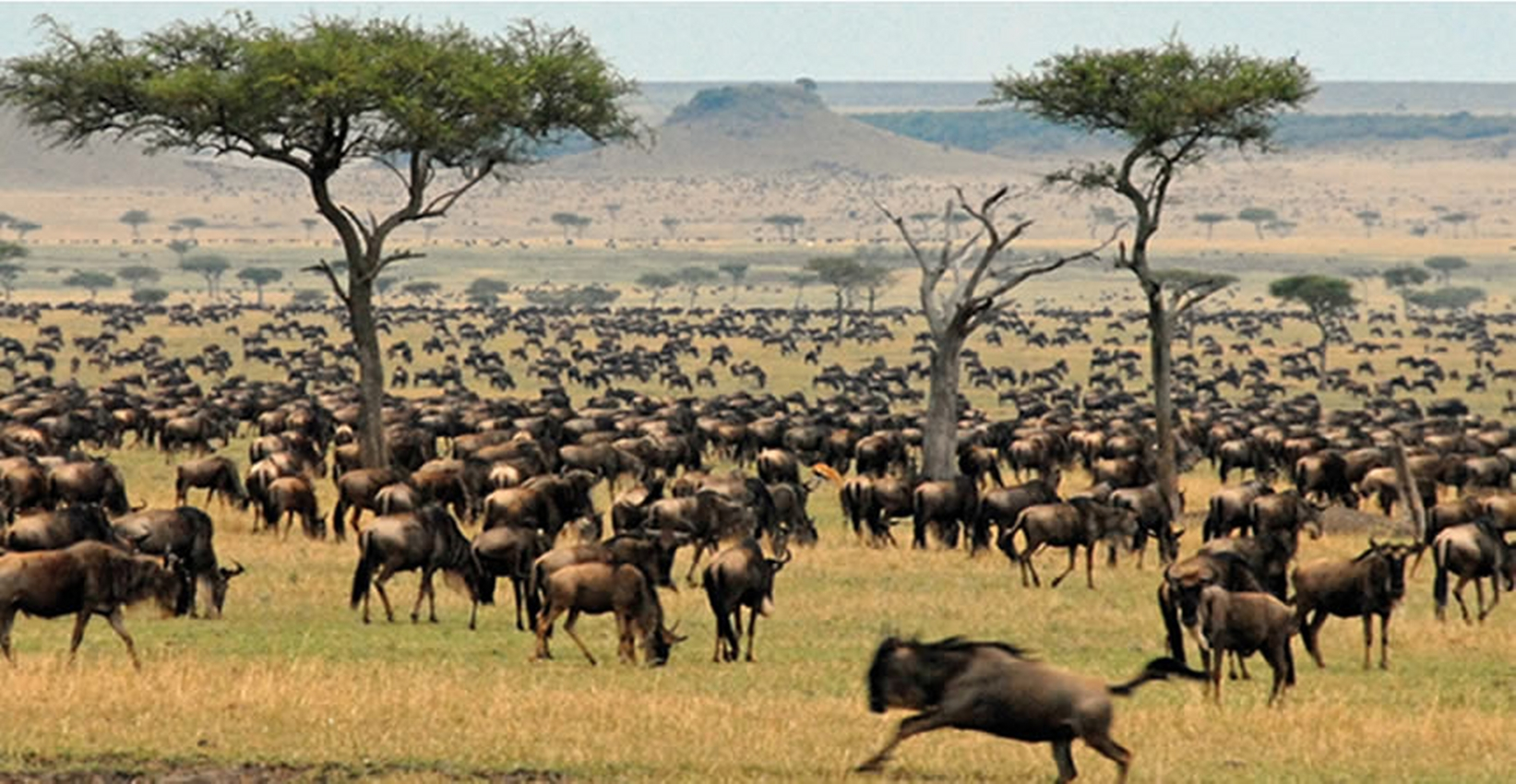 Kenya Lodge Safari Group Joining