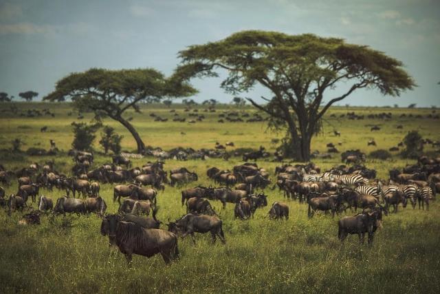 Kenya and Tanzania Budget Camping Safari