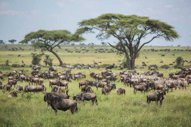 Kenya and Tanzania Budget Safari Tour
