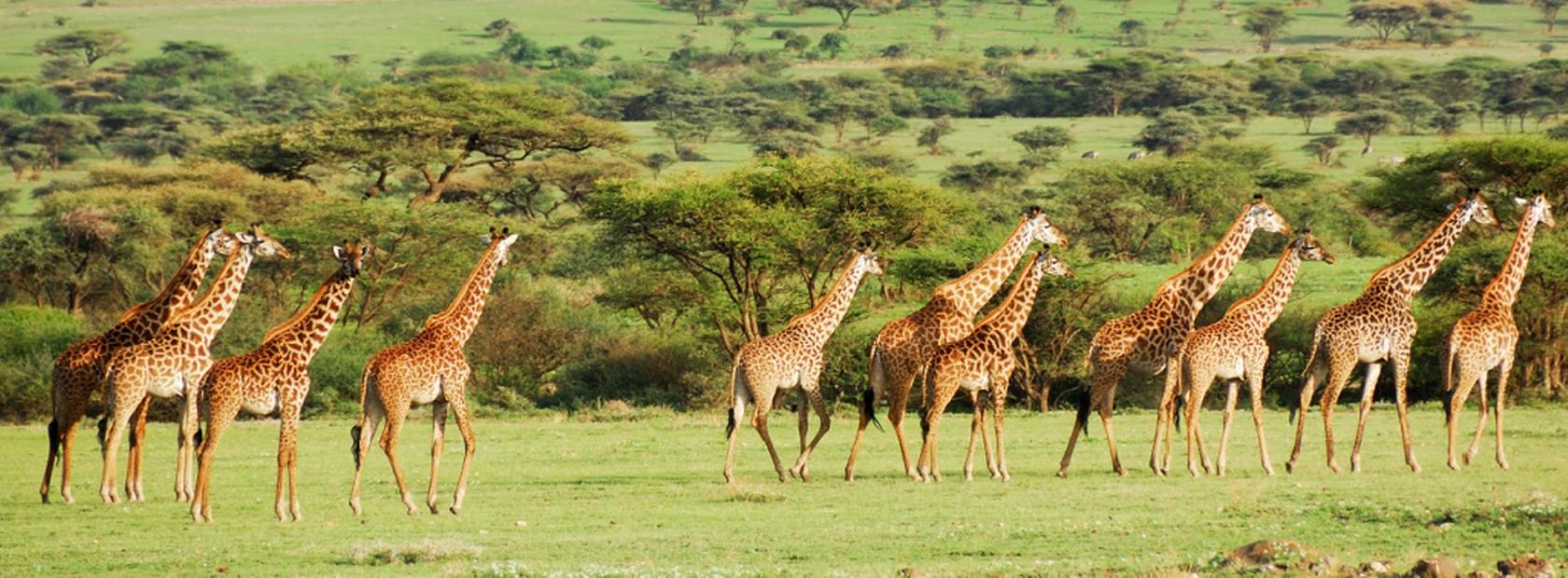 Popular Group Joining Safaris