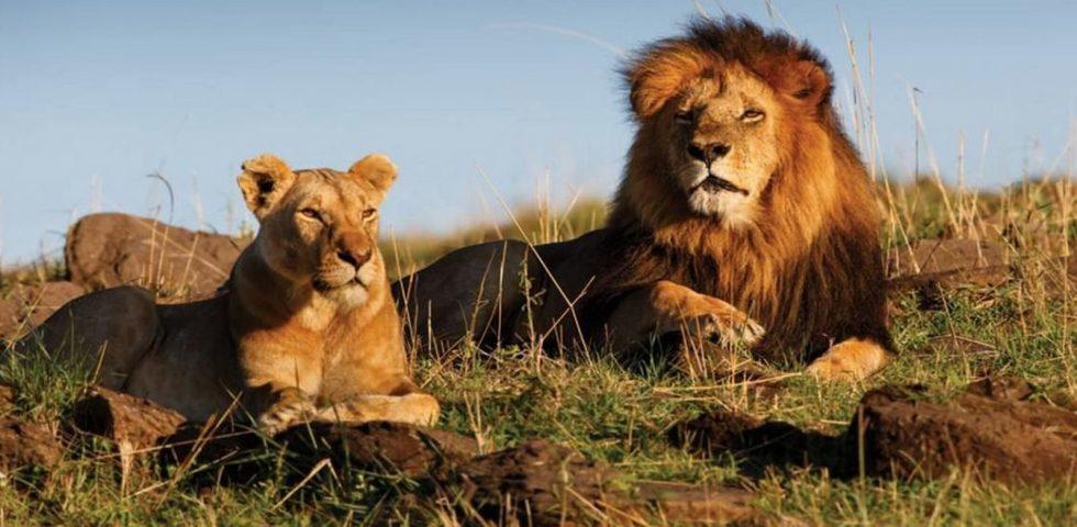 Safari Kenya and Tanzania/ African Wildlife Adventure/ Masai Mara Game Reserve/Serengeti National Park/ Ngorongoro Crater
