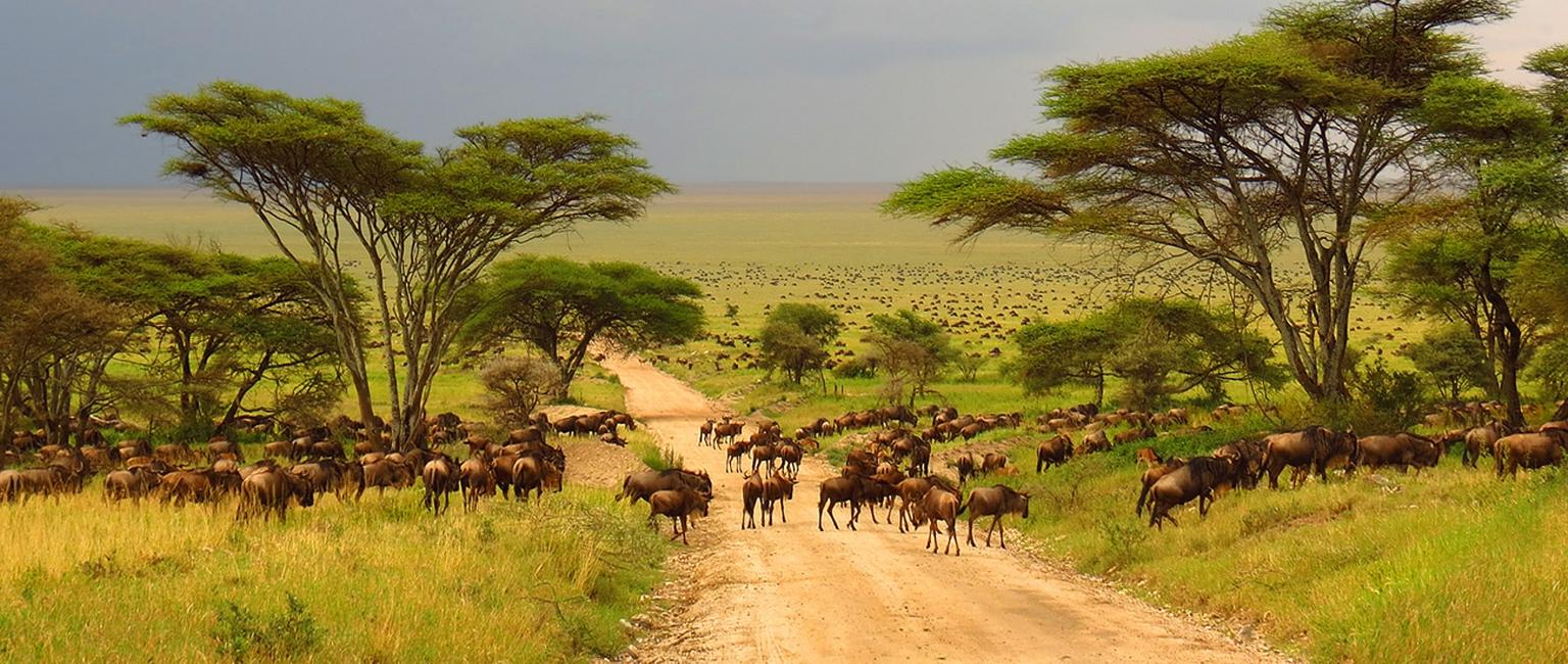 Best Safari In Kenya and Tanzania