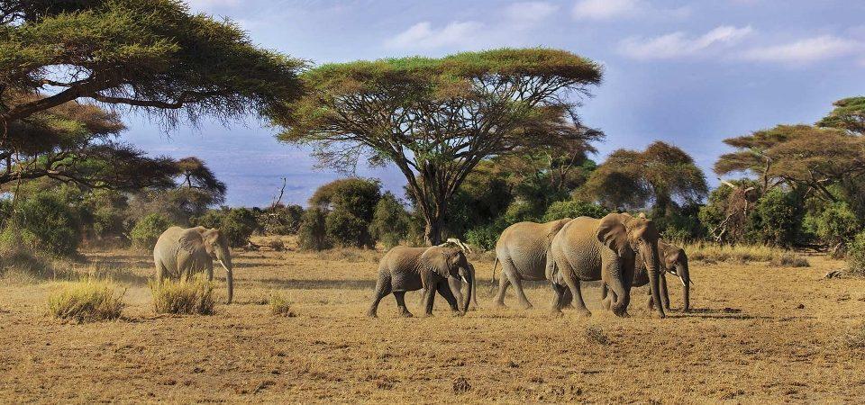 Kenya Safari 2020