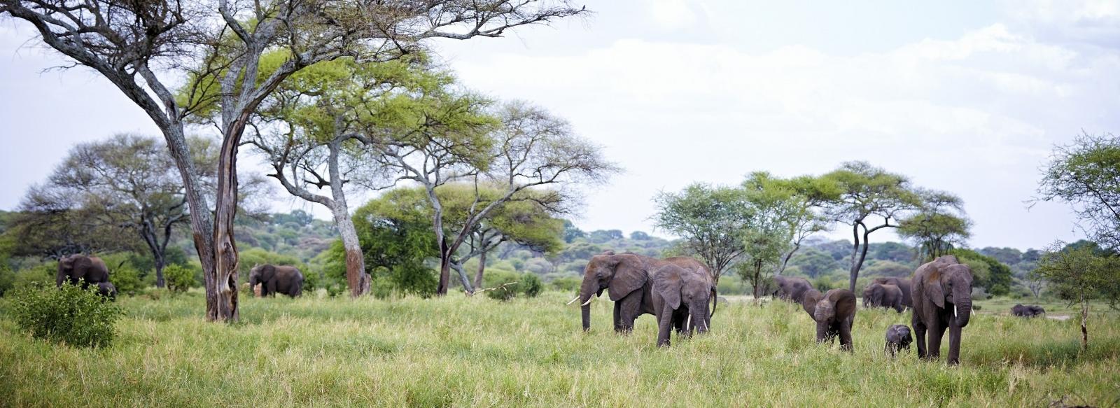 Tanzania Shared Safaris