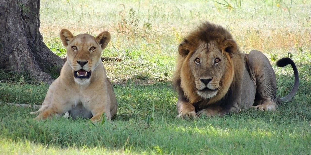 Best Of Kenya and Tanzania Budget Safari